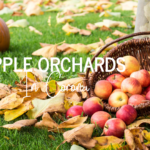 Apple Orchards In Corona